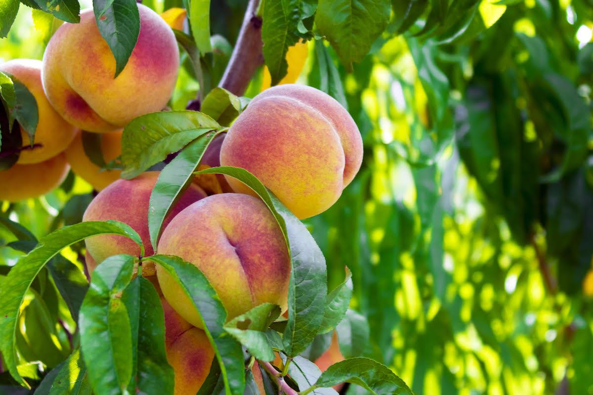Peaches Nude Photos 94
